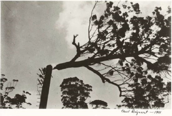 axel poignant cut top tree 1934